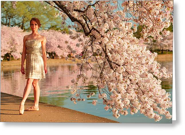 Cherry Blossoms 2013 - 080 Greeting Card by Metro DC Photography