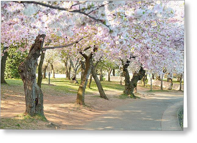 Cherry Blossoms 2013 - 099 Greeting Card by Metro DC Photography