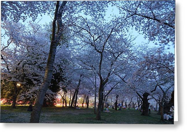 Cherry Blossoms 2013 - 100 Greeting Card by Metro DC Photography
