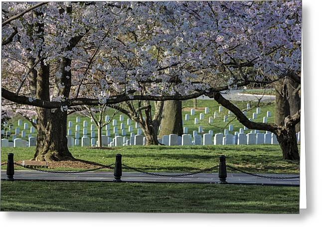 Headstones Greeting Cards - Cherry Blossoms Adorn Arlington National Cemetery Greeting Card by Susan Candelario