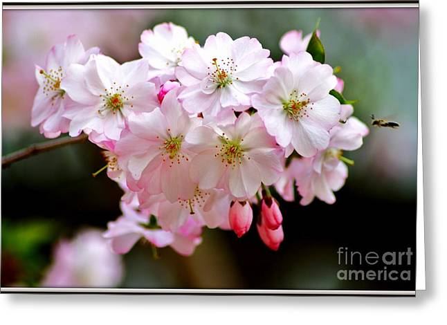 Cherry Blossoms And A Bee Greeting Card by Patti Whitten