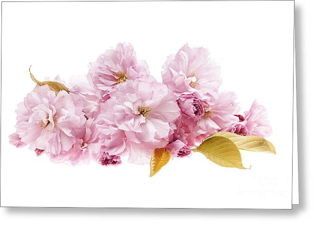 Flower Blooms Greeting Cards - Cherry blossoms arrangement Greeting Card by Elena Elisseeva