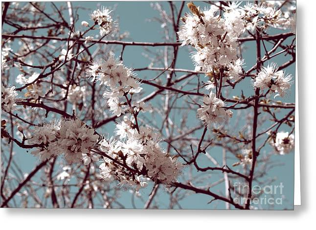 Cherry Blossom Festival Greeting Cards - Cherry blossoms Greeting Card by Cindy Garber Iverson