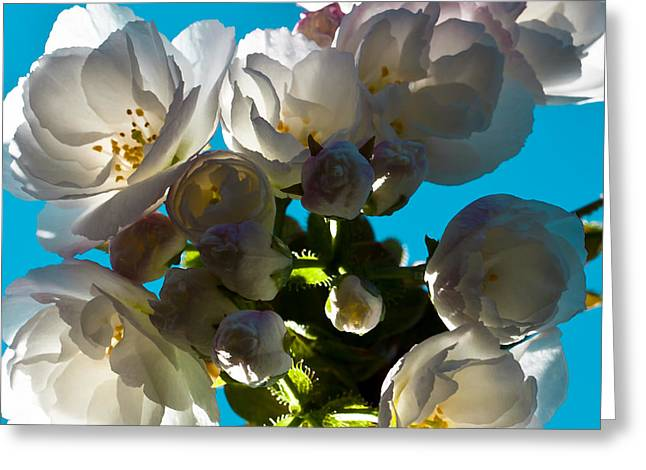 Disambiguation Greeting Cards - Cherry Blossoms Greeting Card by David Patterson