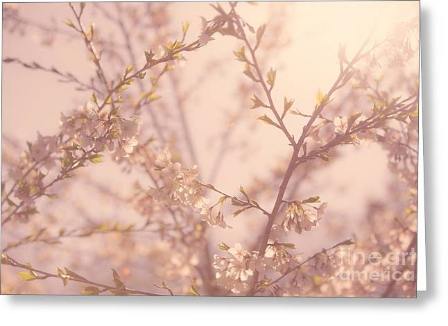 Flowering Tree Greeting Cards - Cherry Blossoms Greeting Card by Diane Diederich