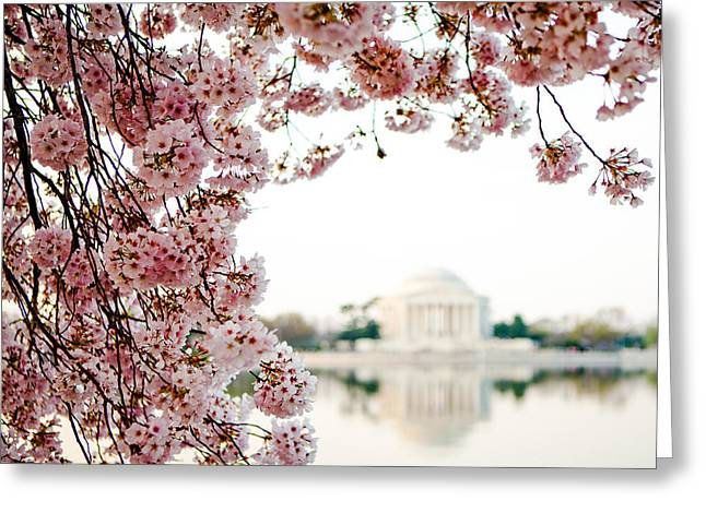 Jefferson Memorial Greeting Cards - Cherry Blossoms Framing the Jefferson Memorial Greeting Card by Susan  Schmitz