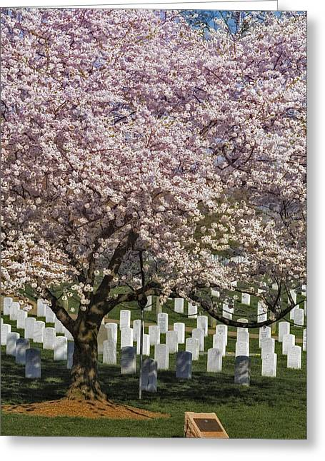 Headstones Greeting Cards - Cherry Blossoms Grace Arlington National Cemetery Greeting Card by Susan Candelario