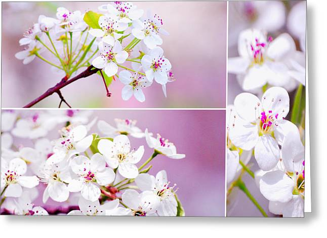 Busybee Greeting Cards - Cherry Blossoms in the Spring Greeting Card by Sabine Jacobs