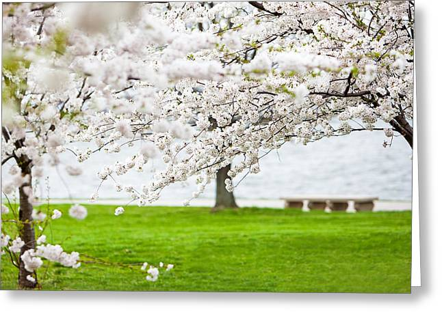 Cherry Blossoms Greeting Cards - Cherry blossoms on the shore of Fort McHenry Greeting Card by Susan  Schmitz