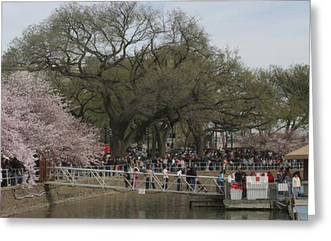 White Greeting Cards - Cherry Blossoms - Panorama - Washington DC - 01132 Greeting Card by DC Photographer