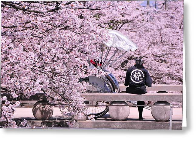 Blossoming Tapestries - Textiles Greeting Cards - Cherry Blossoms Road Greeting Card by Jinjer Templer
