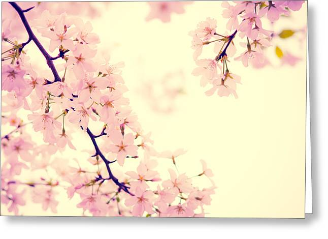Pink Flower Branch Greeting Cards - Cherry Blossoms Squared Greeting Card by Sonja Quintero