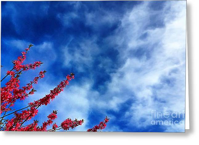 Reaching For Heaven Greeting Cards - Cherry Blossoms to the Sky Greeting Card by John Kreiter
