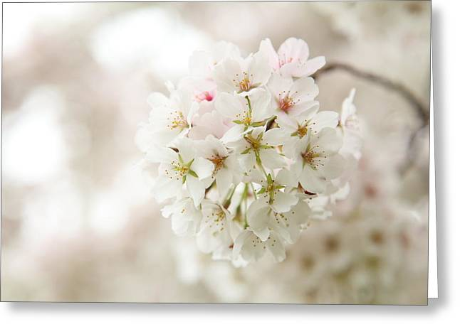 Cherry Blossoms - Washington Dc - 0113101 Greeting Card by DC Photographer