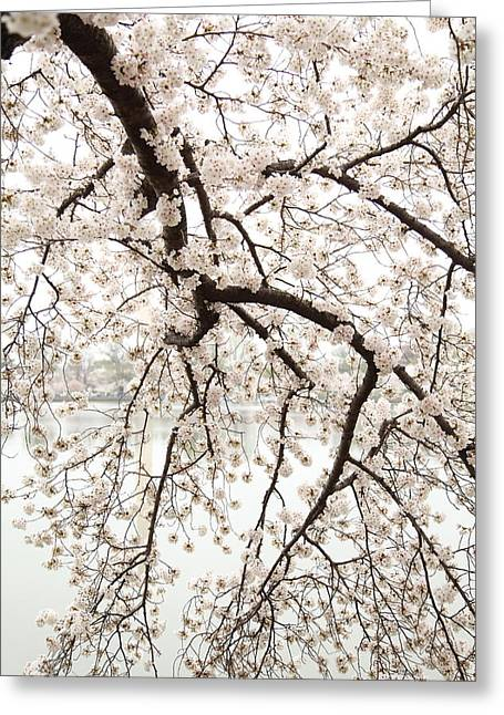 Memorials Greeting Cards - Cherry Blossoms - Washington DC - 0113102 Greeting Card by DC Photographer