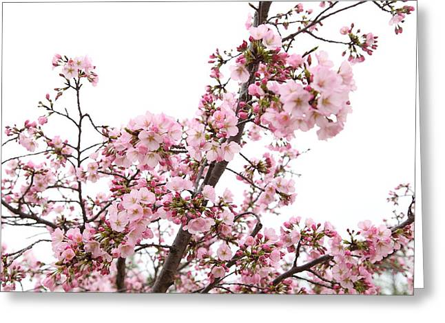 Tidal Greeting Cards - Cherry Blossoms - Washington DC - 0113127 Greeting Card by DC Photographer