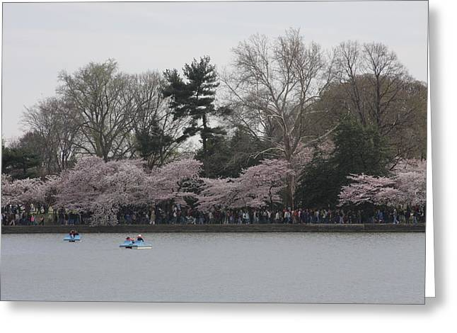 Cherry Blossoms - Washington DC - 011317 Greeting Card by DC Photographer