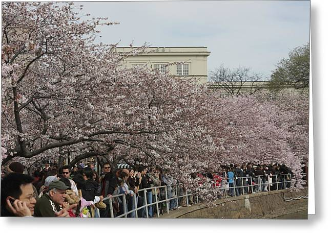 Japan Greeting Cards - Cherry Blossoms - Washington DC - 011324 Greeting Card by DC Photographer