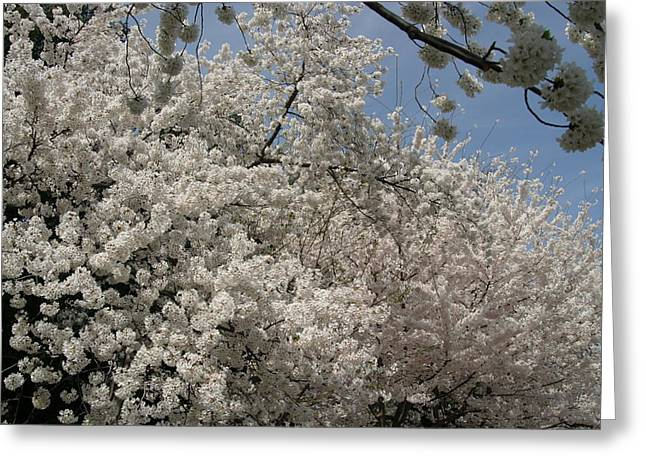 Japanese Greeting Cards - Cherry Blossoms - Washington DC - 011340 Greeting Card by DC Photographer