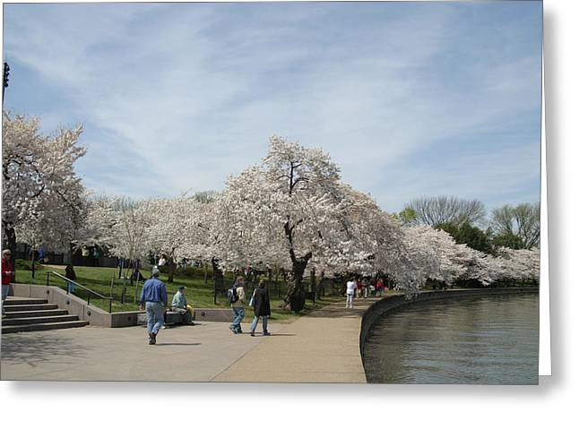 Japan Greeting Cards - Cherry Blossoms - Washington DC - 011345 Greeting Card by DC Photographer