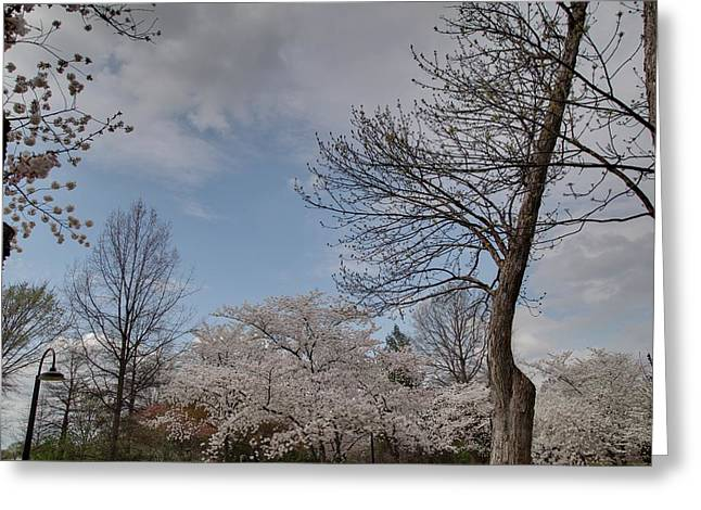 Nationals Greeting Cards - Cherry Blossoms - Washington DC - 011356 Greeting Card by DC Photographer