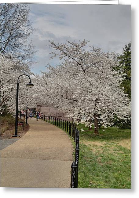 Outside Greeting Cards - Cherry Blossoms - Washington DC - 011357 Greeting Card by DC Photographer