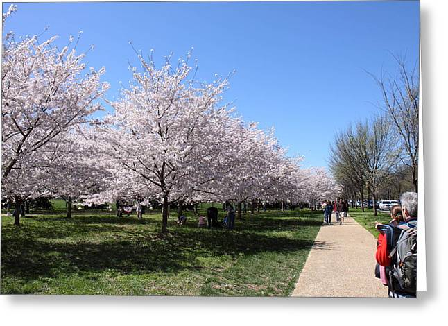 Japan Greeting Cards - Cherry Blossoms - Washington DC - 01136 Greeting Card by DC Photographer