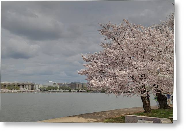 Metropolitan Greeting Cards - Cherry Blossoms - Washington DC - 011361 Greeting Card by DC Photographer