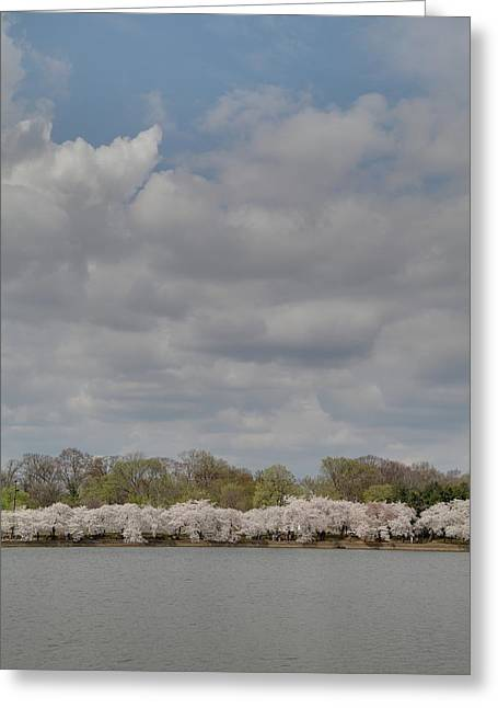 Zen Greeting Cards - Cherry Blossoms - Washington DC - 011368 Greeting Card by DC Photographer