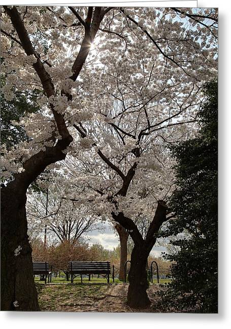 Monuments Greeting Cards - Cherry Blossoms - Washington DC - 011373 Greeting Card by DC Photographer