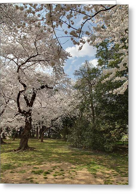 Usa Photographs Greeting Cards - Cherry Blossoms - Washington DC - 011380 Greeting Card by DC Photographer
