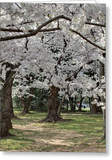 Flowering Greeting Cards - Cherry Blossoms - Washington DC - 011383 Greeting Card by DC Photographer