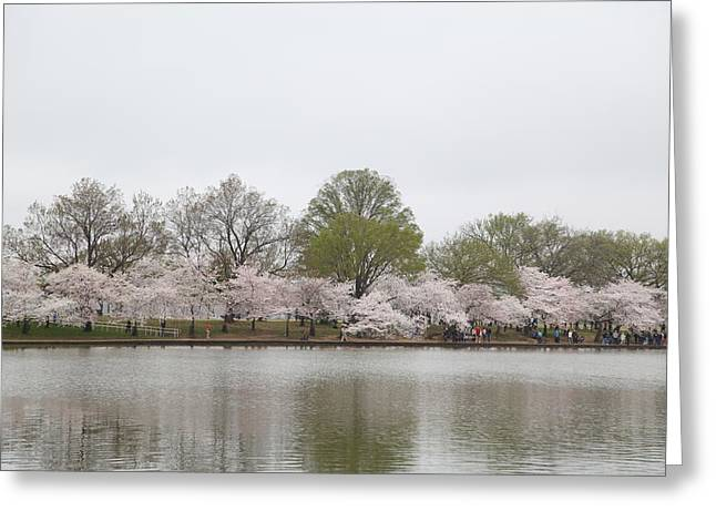 Monument Greeting Cards - Cherry Blossoms - Washington DC - 011394 Greeting Card by DC Photographer