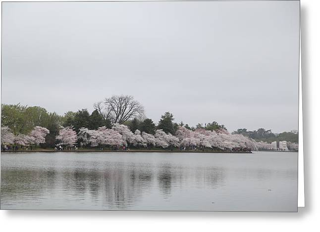 Holidays Greeting Cards - Cherry Blossoms - Washington DC - 011396 Greeting Card by DC Photographer