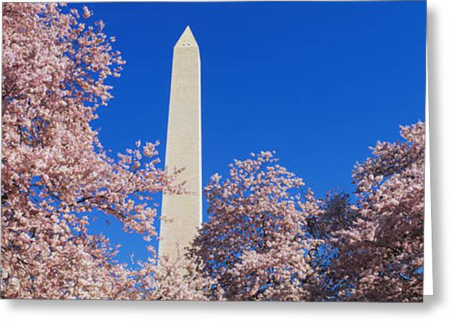 Washington Monument Greeting Cards - Cherry Blossoms Washington Monument Greeting Card by Panoramic Images