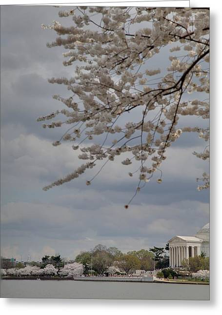 Tokyo Greeting Cards - Cherry Blossoms with Jefferson Memorial - Washington DC - 011312 Greeting Card by DC Photographer