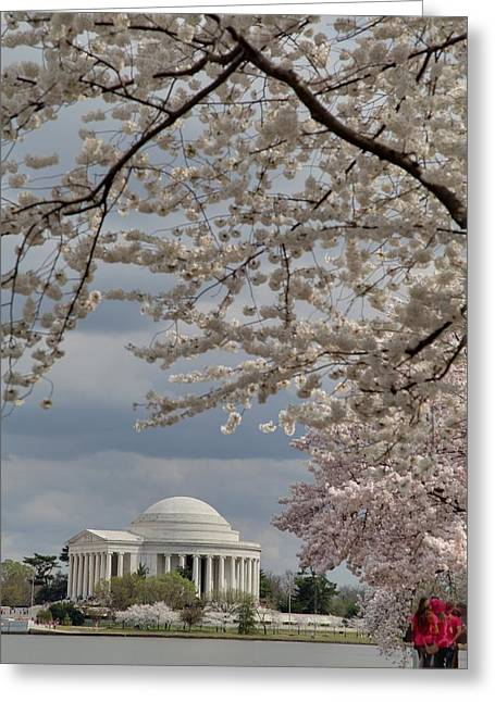 Petals Greeting Cards - Cherry Blossoms with Jefferson Memorial - Washington DC - 011314 Greeting Card by DC Photographer