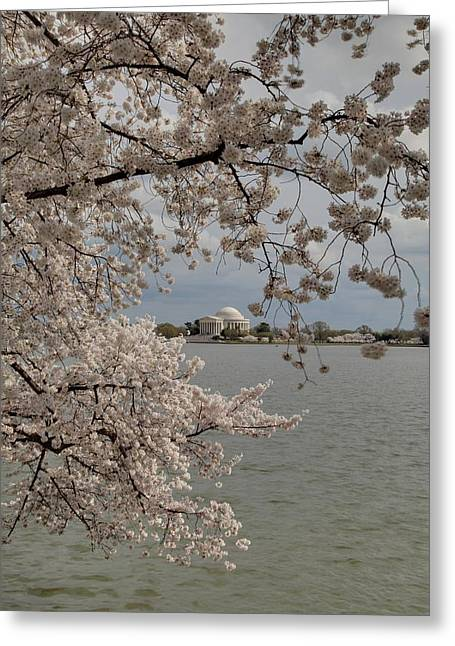 Memorials Greeting Cards - Cherry Blossoms with Jefferson Memorial - Washington DC - 011320 Greeting Card by DC Photographer