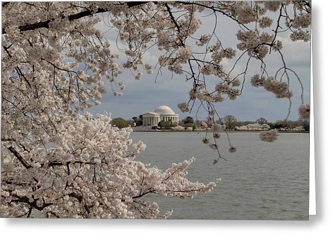 Cherry Blossoms with Jefferson Memorial - Washington DC - 011320 Greeting Card by DC Photographer