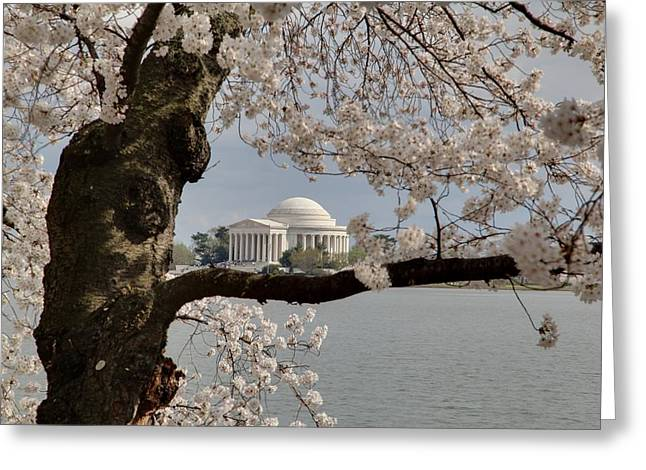 Springtime Greeting Cards - Cherry Blossoms with Jefferson Memorial - Washington DC - 011322 Greeting Card by DC Photographer