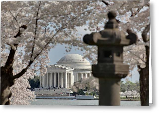 Flower Blossom Greeting Cards - Cherry Blossoms with Jefferson Memorial - Washington DC - 011325 Greeting Card by DC Photographer