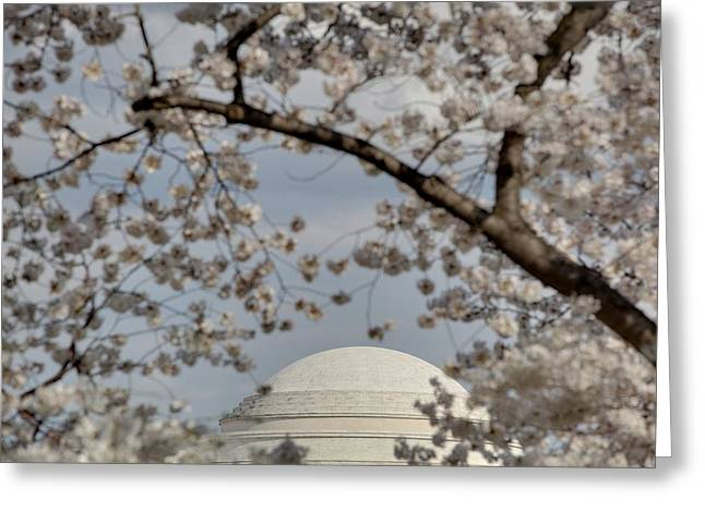 Holiday Greeting Cards - Cherry Blossoms with Jefferson Memorial - Washington DC - 011331 Greeting Card by DC Photographer