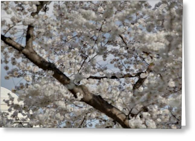 Bloom Greeting Cards - Cherry Blossoms with Jefferson Memorial - Washington DC - 011332 Greeting Card by DC Photographer