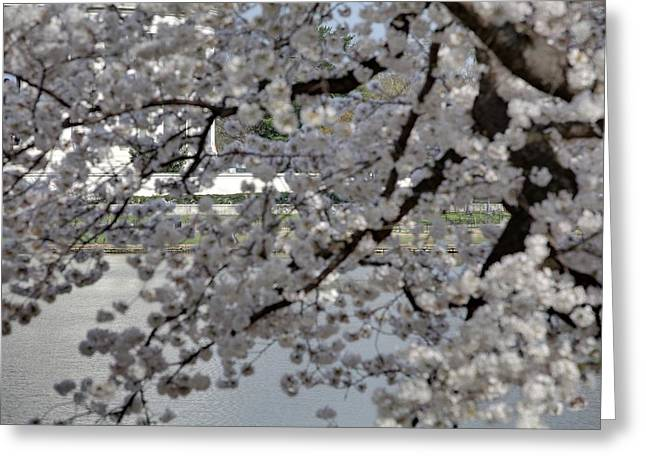 Flowering Greeting Cards - Cherry Blossoms with Jefferson Memorial - Washington DC - 011338 Greeting Card by DC Photographer