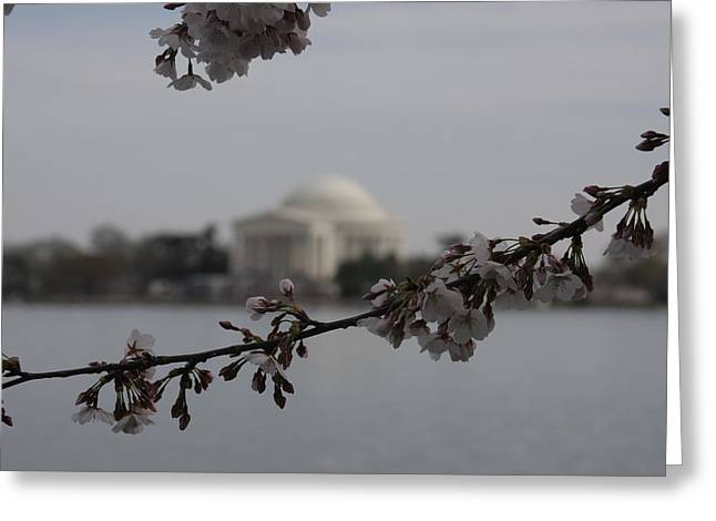 Cherry Greeting Cards - Cherry Blossoms with Jefferson Memorial - Washington DC - 01134 Greeting Card by DC Photographer