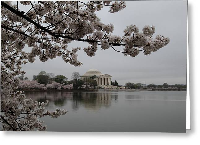 Outdoors Greeting Cards - Cherry Blossoms with Jefferson Memorial - Washington DC - 011343 Greeting Card by DC Photographer