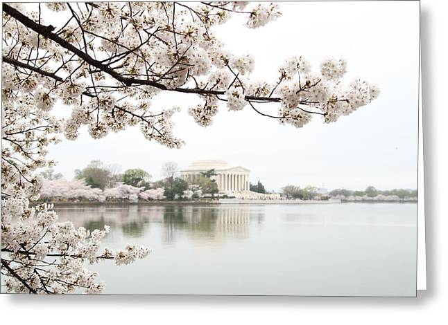Destinations Photographs Greeting Cards - Cherry Blossoms with Jefferson Memorial - Washington DC - 011344 Greeting Card by DC Photographer