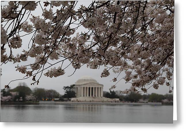 Zen Greeting Cards - Cherry Blossoms with Jefferson Memorial - Washington DC - 011347 Greeting Card by DC Photographer