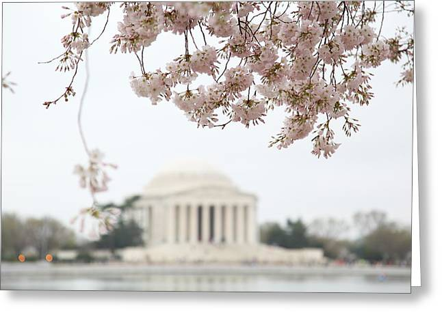 White Photographs Greeting Cards - Cherry Blossoms with Jefferson Memorial - Washington DC - 011350 Greeting Card by DC Photographer