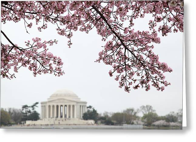 Monuments Greeting Cards - Cherry Blossoms with Jefferson Memorial - Washington DC - 011351 Greeting Card by DC Photographer